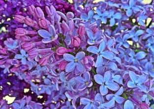 spring-1380357_1280