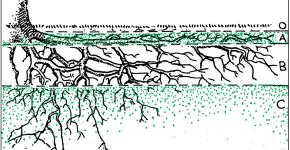 дерево и почва