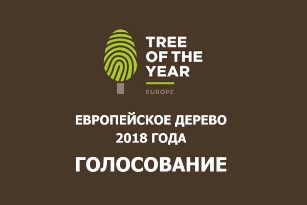Европейское дерево 2018 года