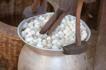 Boiling of cocoons and extraction of silk thread
