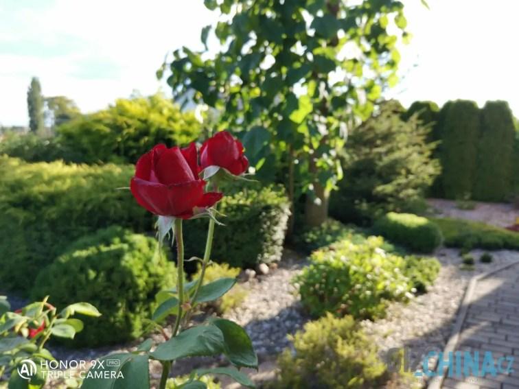 Ostřeno na růži