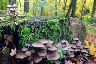 Herbst fetzt - Pilze