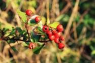 Herbst fetzt - Beeren