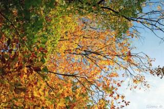 Herbst fetzt - bunte Blätter