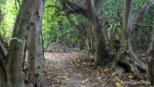 Pistonia Forest