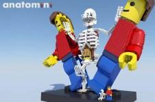 LEGO Ideas 2019 - Anatomini by Stephanix