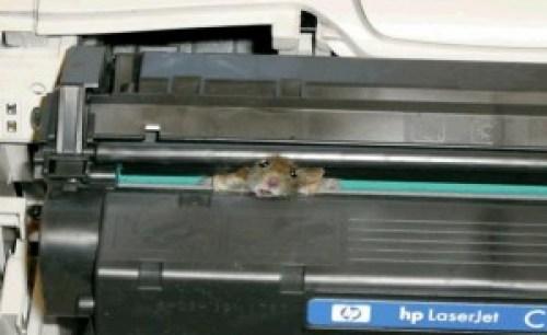 Mouse atascado