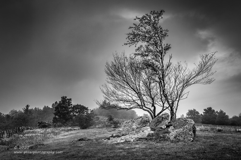 """""""Welcome Trees"""", Canon 5D Mk3, 24-70mm f/2.8L Mk2, No Filters, Converted to B&W in Lightroom"""