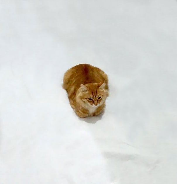 ilustracoes-em-foto-de-gato-gera-imagens-engracadas-blog-geek-publicitario