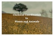Chemical Coordination in Plants & Animals