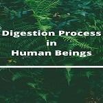 digestion process