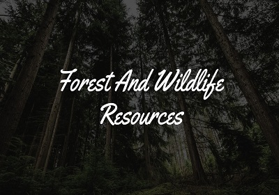 forest - Forest and Wildlife Resources: