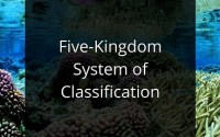 Five-Kingdom System of Classification