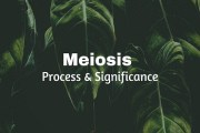 Meiosis (Reductional Cell Divison)