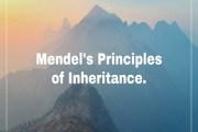 Mendelism or Mendel's Principles of Inheritance