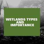 Wetlands types and importance