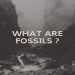 What are fossils