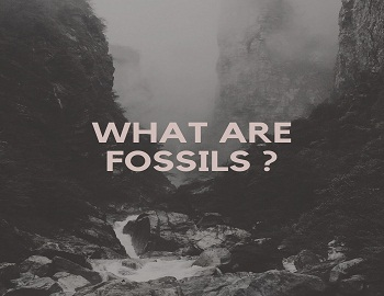 What are fossils - What are fossils? What do they tell us about the process of evolution?
