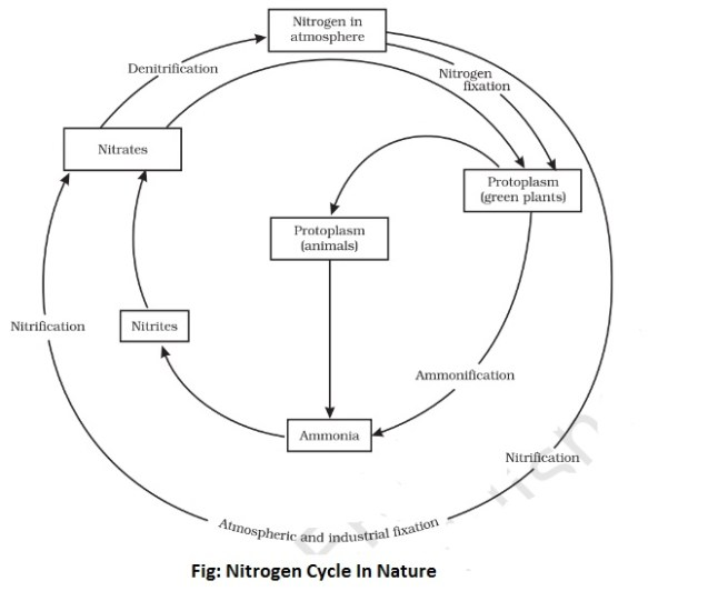 nitrogen cycle in nature - Working of Nitrogen Cycle in Nature