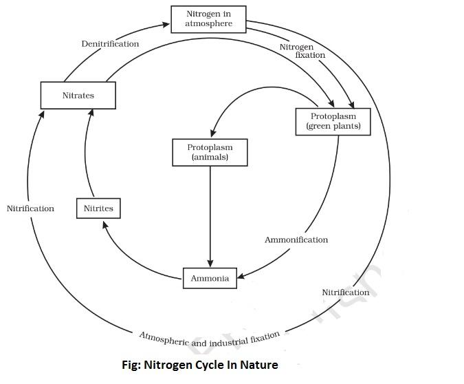 nitrogen cycle in nature - Nitrogen Cycle In Nature