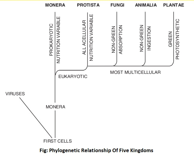 phylogenetic relationship of five kingdoms - Five-Kingdom System of Classification
