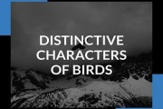 Distinctive Characters Of Birds