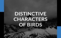 Distinctive Characters Of Birds