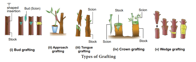 types of grafting 1024x326 - Vegetative Propagation: Natural & Artificial Methods