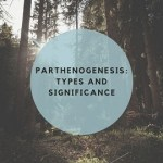 Parthenogenesis Types And Significance