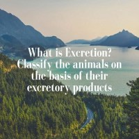 What is Excretion? Classify the animals on the basis of their excretory products