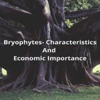 Bryophytes- Characteristics And Economic Importance