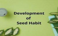 Development of Seed Habit