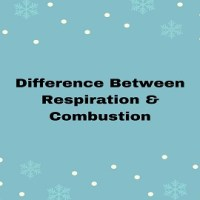 Difference Between Respiration And Combustion