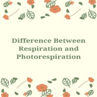 Difference Between Respiration and Photorespiration