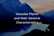 What are Vascular Plants? Give their general characteristics and reasons of their dominance