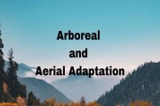 Arboreal and Aerial Adaptation