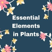 Essential Elements in Plants
