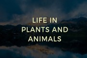 Life in Plants and Animals