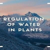 Regulation of Water in Plants