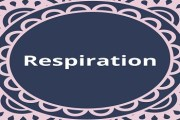 Write a short note on Respiration?