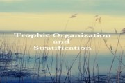 Trophic Organization and Stratification