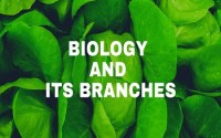 Biology and its Branches