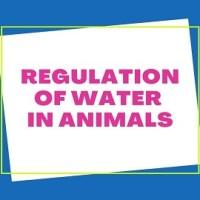 Regulation of Water in Animals