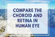Compare the Choroid and Retina in Human Eye