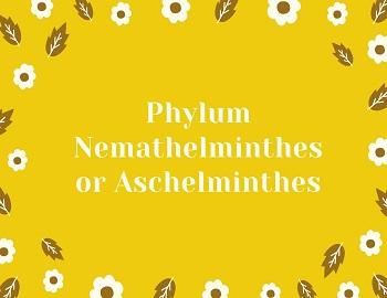 Definiți aschelminthes. Definiți aschelminthes - FILUMUL ANNELIDA