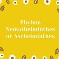 Phylum Nemathelminthes or Aschelminthes