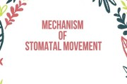 Mechanism of Stomatal Movement