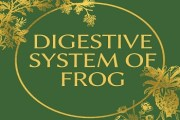 Digestive System of Frog
