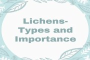 Lichens-Occurrence, Morphology, Internal Structure and Importance