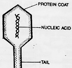 Virus and its Structure - Virus and its Structure